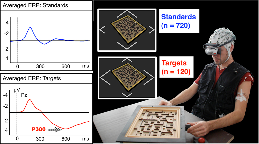 Figure 1: Labyrinth Oddball: The subject plays a physical simulation of a ball labyrinth game. He has to respond to rare target stimuli by pressing a buzzer and ignore the more frequent standard stimuli. The insets show the shape of the stimuli, which can be distinguished by the length of the edges. The graphs to the left depict the event-related potentials (ERPs) evoked by both stimulus types at electrode Pz. Both stimuli elicit an early negative potential attributed to visual processing, but only targets evoke an additional strong, positive potential around 600 ms after the stimulus. [1]